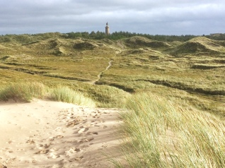 looking back towards the lighthouse and the forest