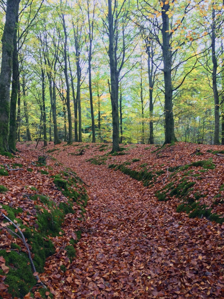 Beech Carpet